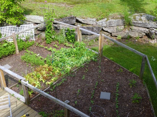 Vegetable garden, end of June