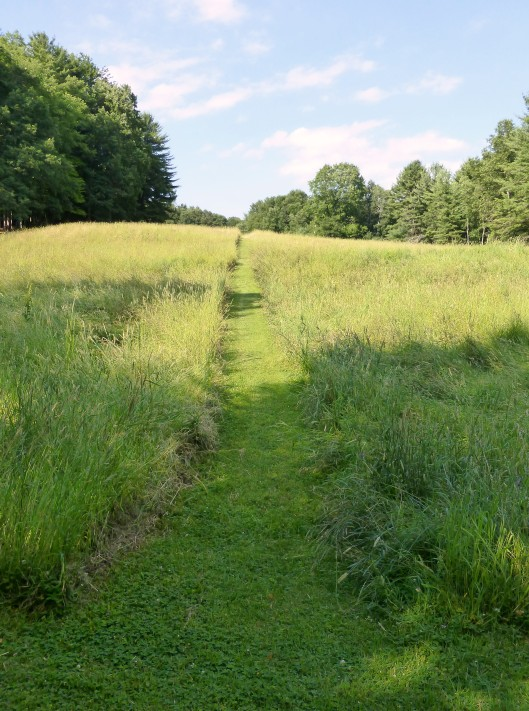 path through meadow