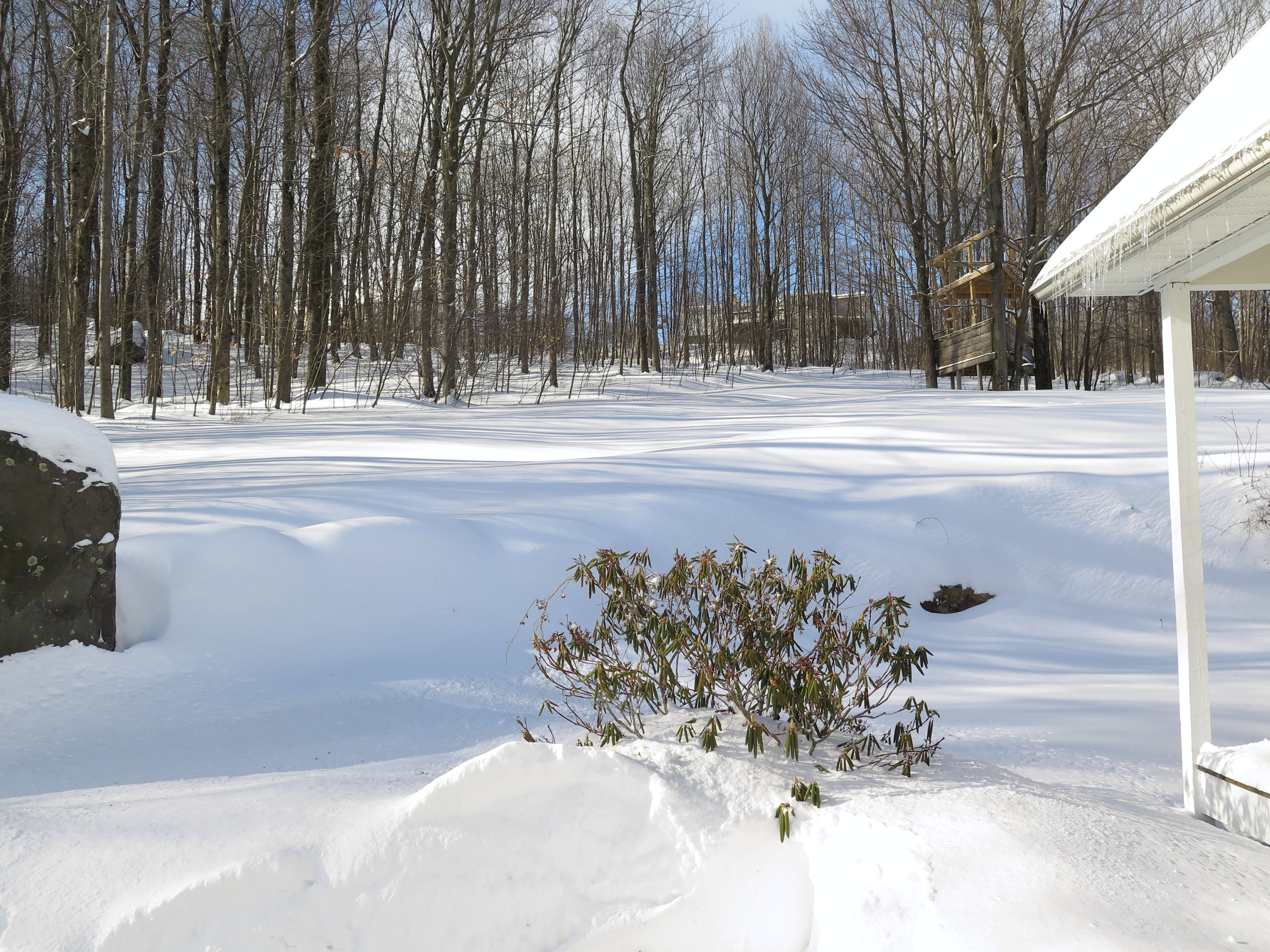tuesday u0027s views after a foot of snow february 3 2015 cosmos